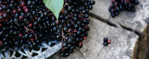 what are the benefits of elderberry & cbd gummies